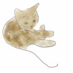 Photo de Profil de SmallBug